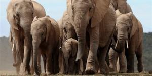 Email x1 171114 african elephants mn 1340 ec1272dbadf13d2c64c1972915d22337.focal 860x430