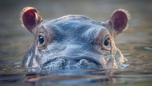 Email x1 fiona hippo