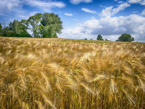 Email x1 barley