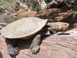 Email x1 636565319397271437 xxx turtle