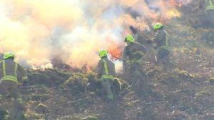 Email x1  97618270 fire grass bbc